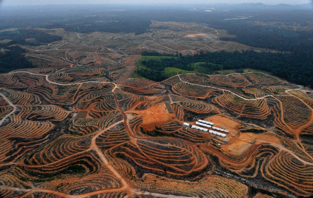 Arial view of palm oil plantation